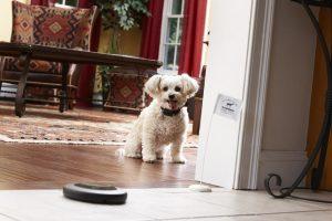 poodle staying within indoor dog fence boundary