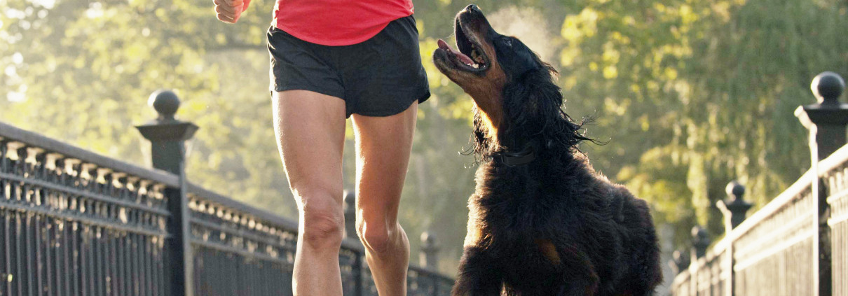 dog and owner on run