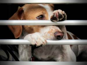 Dog looking through bars