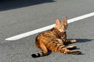 Cat sat in centre of road