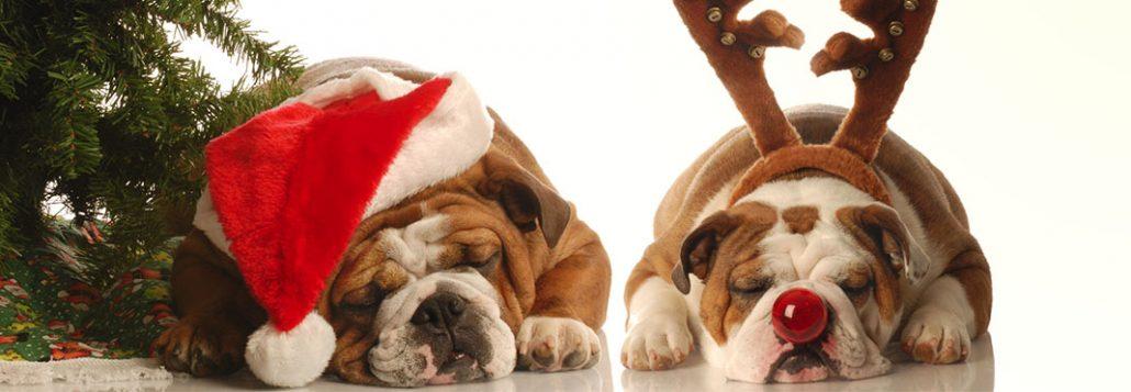 Doggy Christmas Gift Guide