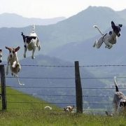 dog jumping over fence